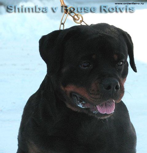 Shimba from House Rotvis